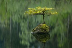 Медитации и мечты